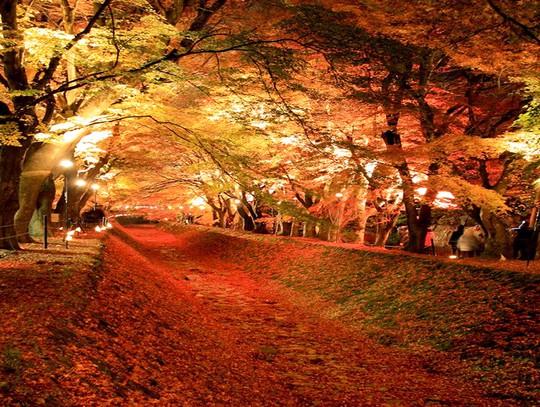 Những đường cây mùa thu đẹp nhất thế giới - Ảnh 8.