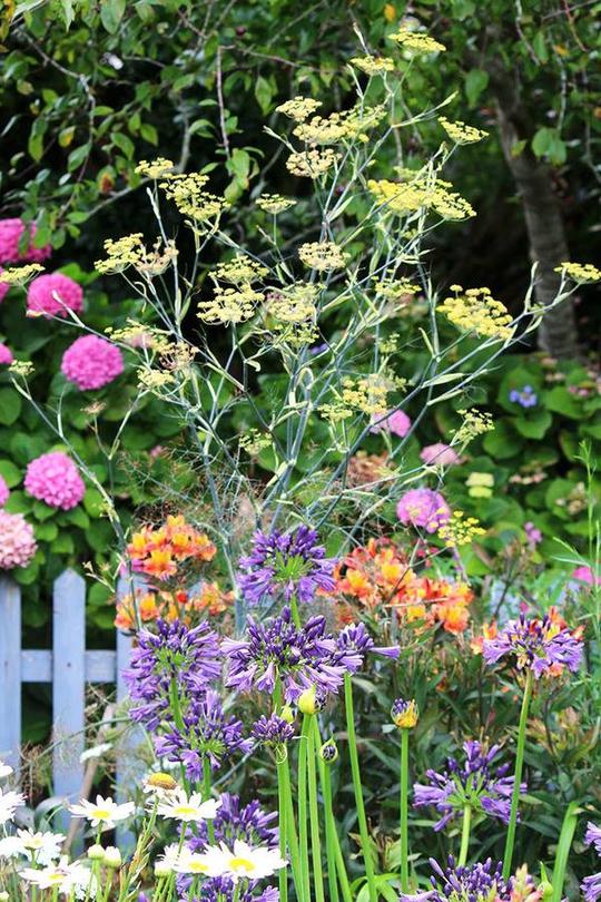 Chốn bình yên bên vườn hoa đẹp như thiên đường của bà lão 83 tuổi - Ảnh 8.