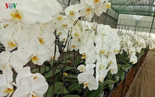 Ngắm ngàn hoa đua sắc tại làng hoa nổi tiếng ở Đà Lạt - Ảnh 8.