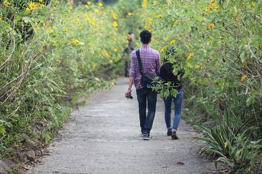 Đẹp nao lòng rừng hoa dã quỳ dưới chân núi Tản - Ảnh 8.