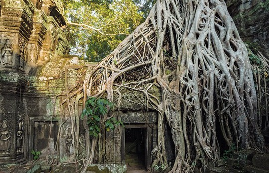 Ngắm những thân cây độc lạ trên thế giới - Ảnh 8.