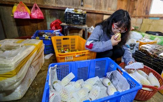 Thời điểm hiện tại, mỗi ngày trang trại cho thu hoạch 100kg, ngoài giao cho thương lái, anh Định còn bán ngay tại vườn với giá 80.000 đồng một kg.