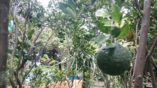 Vườn cây ăn trái 4 tỉ đồng như công viên của bà mẹ 2 con tại TP HCM - Ảnh 9.