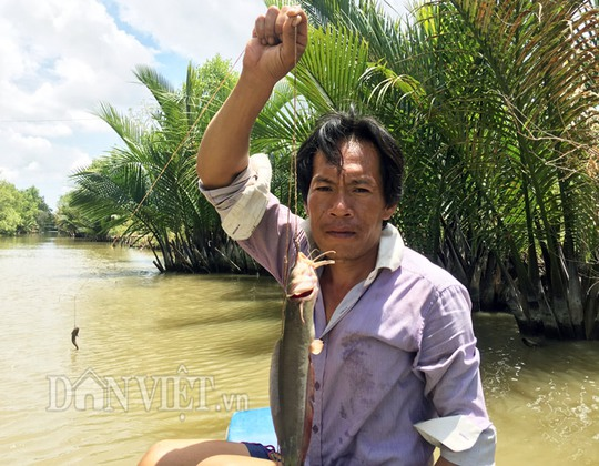 Săn cá ngát trên sông ở Cà Mau - Ảnh 3.