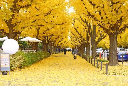 Những đường cây mùa thu đẹp nhất thế giới - Ảnh 9.
