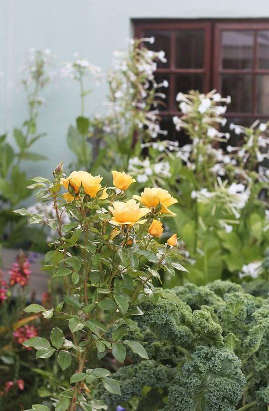 Chốn bình yên bên vườn hoa đẹp như thiên đường của bà lão 83 tuổi - Ảnh 9.
