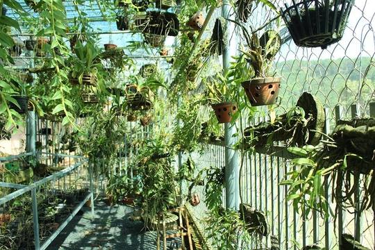 Vườn lan rừng sang chảnh, làm và chơi, thảnh thơi có tiền - Ảnh 3.