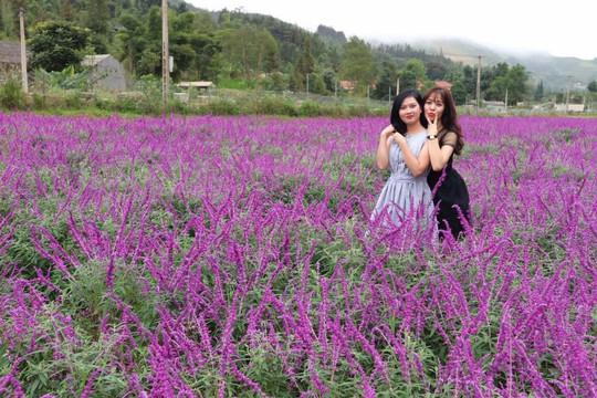 Ngẩn ngơ với thung lũng hoa ở cao nguyên Lào Cai - Ảnh 3.