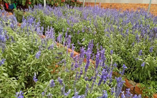 Ngắm ngàn hoa đua sắc tại làng hoa nổi tiếng ở Đà Lạt - Ảnh 9.