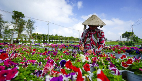 Làng hoa lớn nhất Nam bộ Sa Đéc tất bật vào mùa Tết - Ảnh 9.