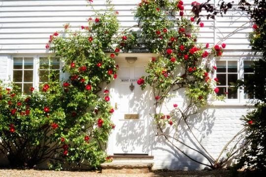 Muôn kiểu trang trí mặt tiền nhà với hoa cực hút mắt - Ảnh 9.