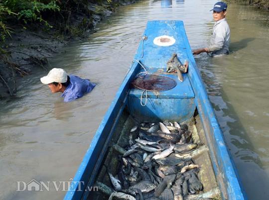 Đối với những con cá không nổi lên, phải trực tiếp mò dưới kênh như thế này