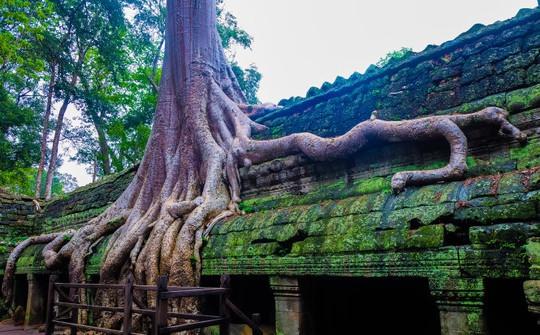 Ta Prohm - ngôi đền của những rễ cây kỳ dị - Ảnh 10.