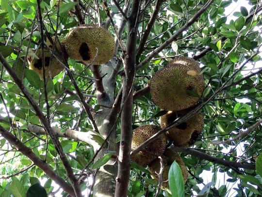 Vườn cây ăn trái 4 tỉ đồng như công viên của bà mẹ 2 con tại TP HCM - Ảnh 10.