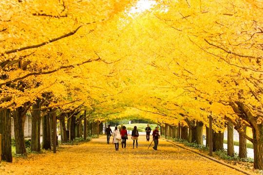 Những đường cây mùa thu đẹp nhất thế giới - Ảnh 10.