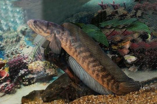 Những loài cá tiến vua đắt đỏ nhưng vẫn được săn lùng - Ảnh 10.