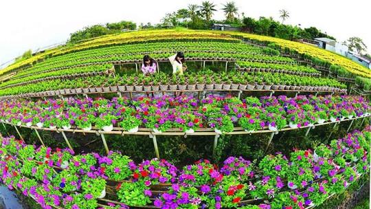 Làng hoa lớn nhất Nam bộ Sa Đéc tất bật vào mùa Tết - Ảnh 10.