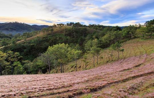 Ma mị cỏ hồng trong sương sớm Đà Lạt - Ảnh 2.