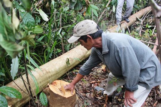 Một người dân bức xúc trước việc cho phép đốn hạ cây rừng (Ảnh: Đức Nhuận)