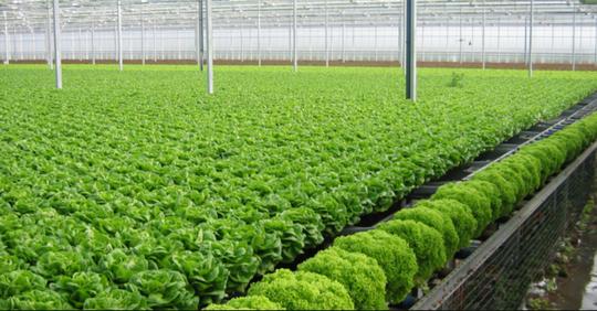 8 nông sản giúp nông dân thu tiền tỉ mỗi năm