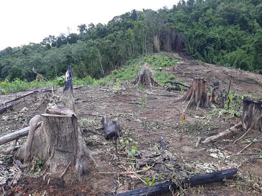 Đề nghị cách chức Trưởng ban Tuyên giáo huyện liên quan phá rừng - Ảnh 1.