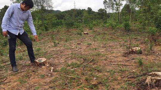 Khởi tố đối tượng bán rừng thông đặc dụng - Ảnh 1.