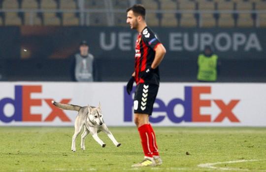 Chó làm gián đoạn trận đấu ở Europa League - Ảnh 2.