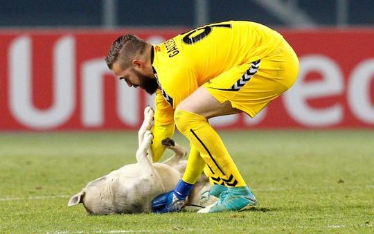 Chó làm gián đoạn trận đấu ở Europa League - Ảnh 4.