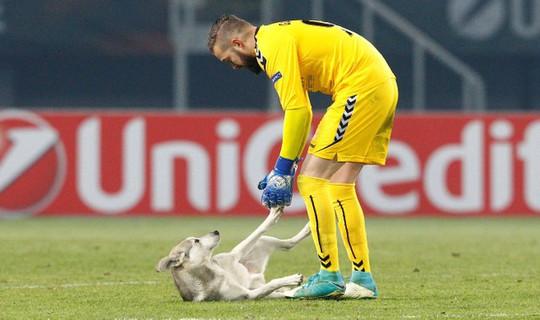 Chó làm gián đoạn trận đấu ở Europa League - Ảnh 3.