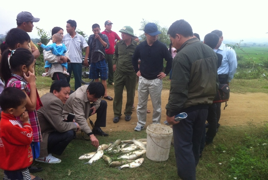 Cá nuôi trong ao của người dân chết hàng loạt sau sự cố vỡ hồ chứa bùn thải Ảnh: Nguyễn Phê
