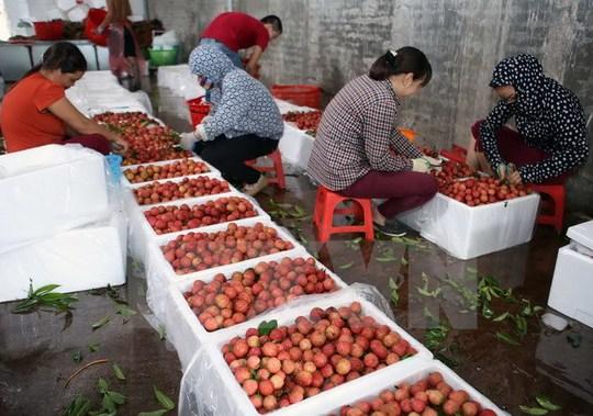 """Nhiều trái cây Việt """"vô hình"""" ở nước ngoài - Ảnh 1."""