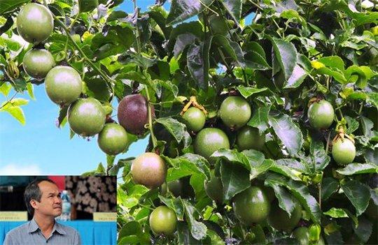 Bầu Đức bán trái cây mỗi ngày lãi hơn 2 tỉ đồng - Ảnh 1.