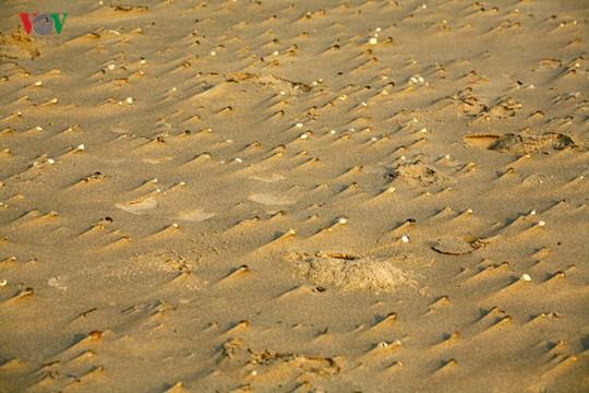 Ngắm vẻ đẹp của bãi biển hoang sơ dưới chân đèo Ngang - Ảnh 9.