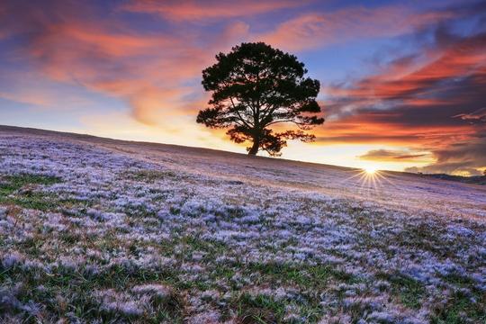 Ngây ngất với Thảo nguyên - cỏ hồng Đà Lạt dịp lễ 2-9 - Ảnh 6.