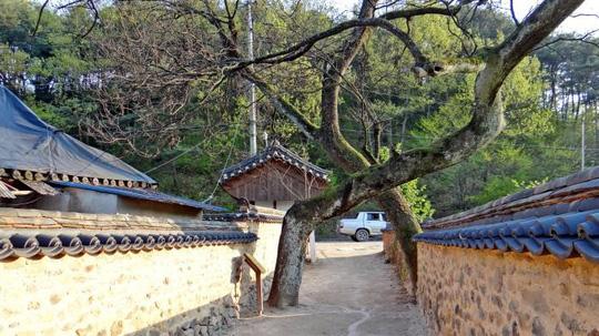Vẻ đẹp của quê hương HLV Park Hang Seo - Ảnh 11.
