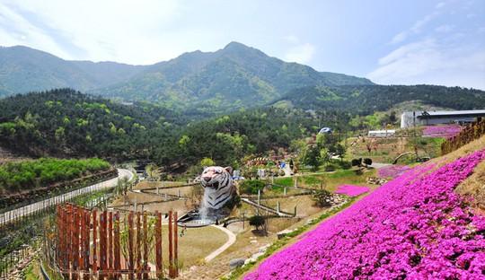 Vẻ đẹp của quê hương HLV Park Hang Seo - Ảnh 13.