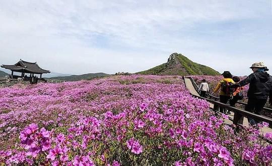 Vẻ đẹp của quê hương HLV Park Hang Seo - Ảnh 6.