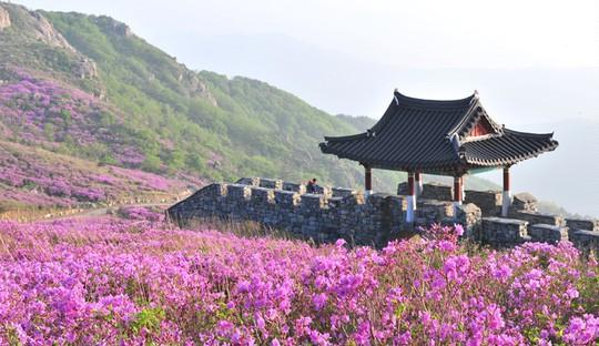Vẻ đẹp của quê hương HLV Park Hang Seo - Ảnh 7.