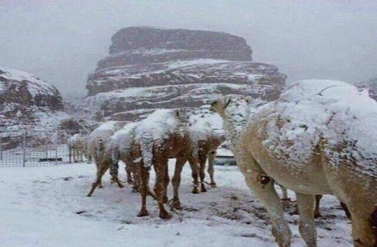 Kinh ngạc tuyết phủ trắng sa mạc ở Trung Đông - Ảnh 13.