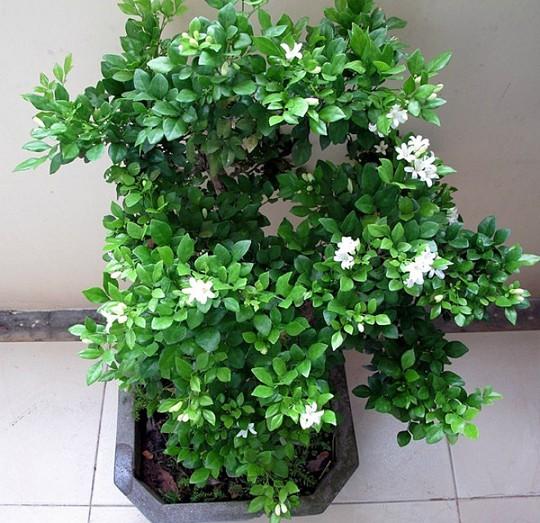 10 loại cây trồng trong nhà xua tan nỗ lo ô nhiễm không khí - Ảnh 8.