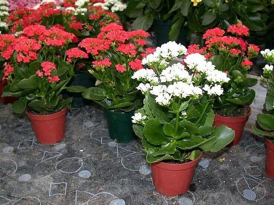 10 loại cây trồng trong nhà xua tan nỗ lo ô nhiễm không khí - Ảnh 3.