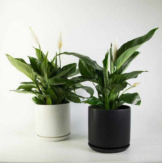 10 loại cây trồng trong nhà xua tan nỗ lo ô nhiễm không khí - Ảnh 5.