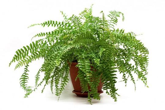 10 loại cây trồng trong nhà xua tan nỗ lo ô nhiễm không khí - Ảnh 6.