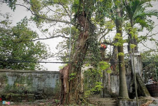 Lý lịch chi tiết của bảo vật có giá 50 tỉ ở chùa Vĩnh Phúc - Ảnh 1.