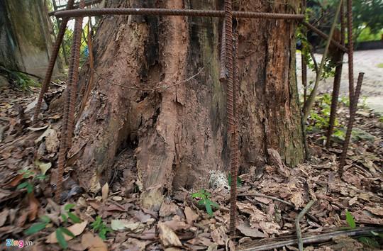 Lý lịch chi tiết của bảo vật có giá 50 tỉ ở chùa Vĩnh Phúc - Ảnh 2.