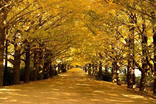 Săn vé Vietjet giờ vàng, dự lễ hội Nhật - Hàn - Đài đình đám - Ảnh 3.