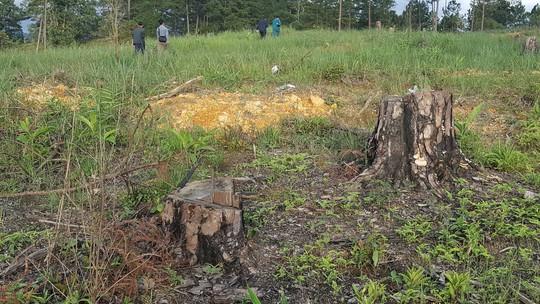 Lâm Đồng: Đình chỉ công tác 1 phó chủ tịch xã để mất rừng gần trụ sở - ảnh 5