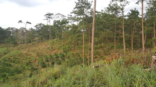 Lâm Đồng: Đình chỉ công tác 1 phó chủ tịch xã để mất rừng gần trụ sở - ảnh 4