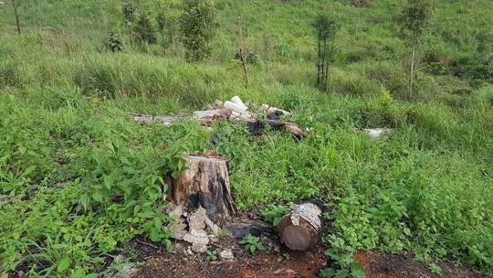 Lâm Đồng: Đình chỉ công tác 1 phó chủ tịch xã để mất rừng gần trụ sở - ảnh 3