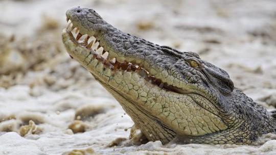 Úc: Đang đi câu cá, người phụ nữ bị cá sấu tha đi - ảnh 1